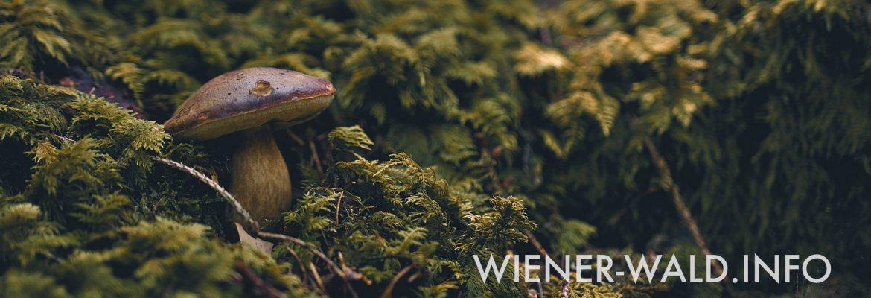 Wienerwald.info – Das Infoportal für den schönen Wienerwald
